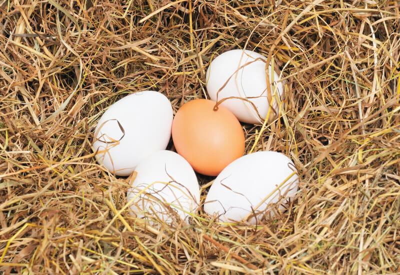 controleer of een ei vers is